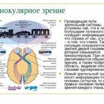 stereoskopicheskoe-zrenie