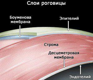 sloi-rogovitsy